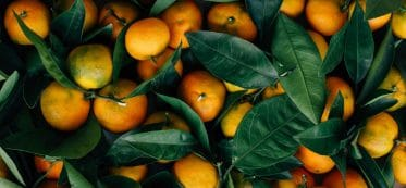 how long are oranges good for