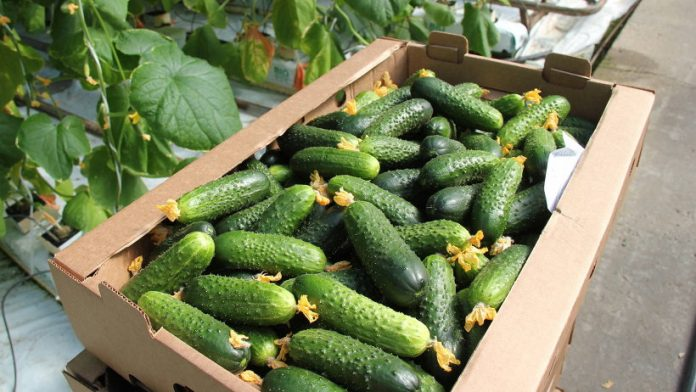 Do Cucumbers Have to Be Refrigerated