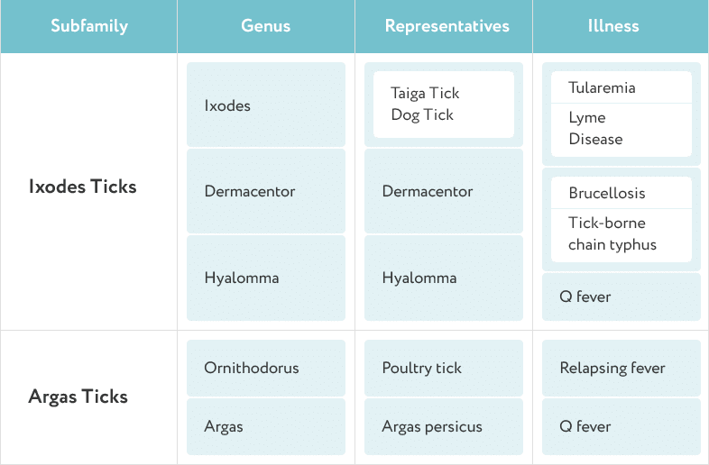 types of ticks