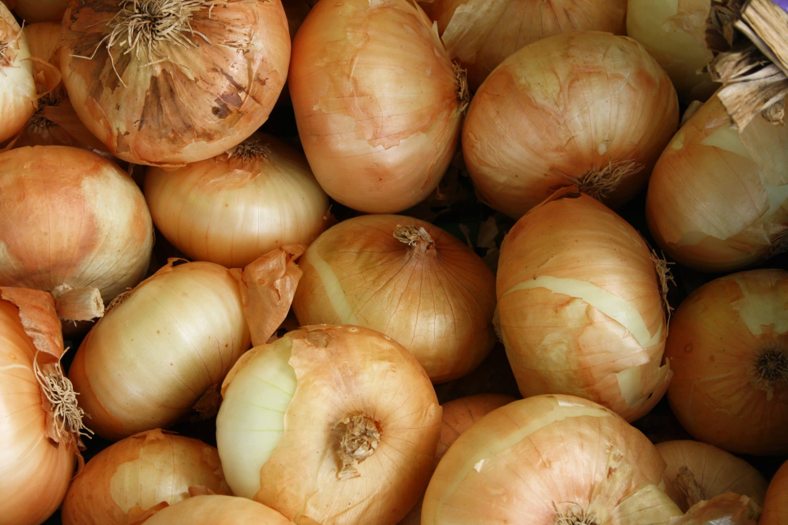 How to tell if a yellow onion is bad