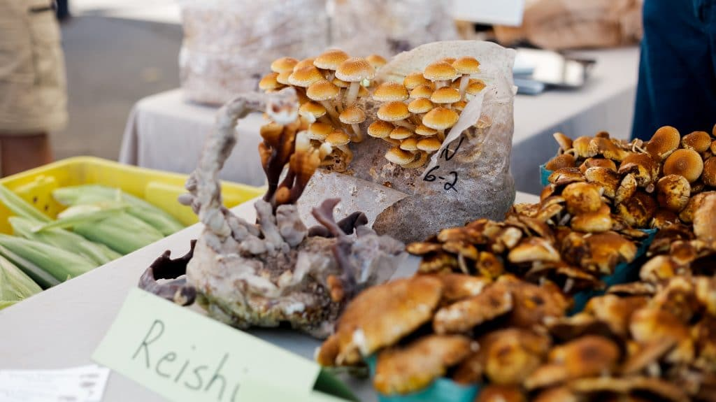 How to keep mushrooms fresh