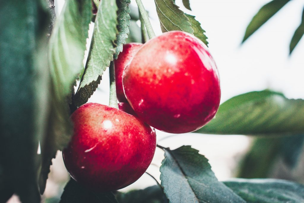 Things You Always Wanted to Ask About Apple Acetum